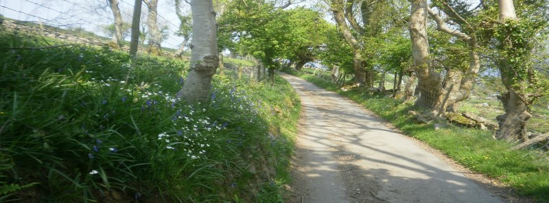 Road leading to cottage